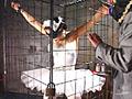 囚われの華麗なプリマドンナおぞましき牝犬馴致