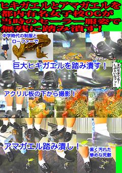 「ヒキガエルとアマガエルを都内有名女子校OGが踏み潰す!」のサンプル画像
