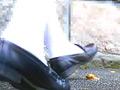 お嬢様のローファーが巨大カタツムリを踏み潰す!
