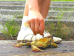 クラッシュ:短靴やサンダルでヒキガエルを踏むあどけない女の子!