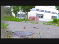 【復刻版】ザリガニが踏みにじられ自転車に轢き殺される