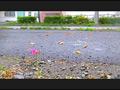 【復刻版】カタツムリがローファーで踏み潰される!2 6