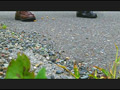 【復刻版】カタツムリがローファーで踏み潰される!2 10