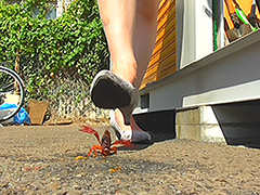 普通の女性・小百合さんがザリガニ・ゴキブリ・魚を踏む 無料画像