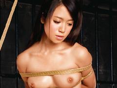 【サンプル動画】緊縛令嬢2 藤井シェリー