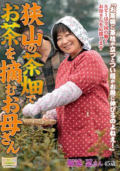 「狭山の茶畑でお茶を摘むお母さん 堀池忍」のパッケージ画像
