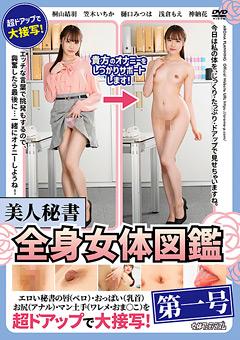 美人秘書全身女体図鑑 第一号