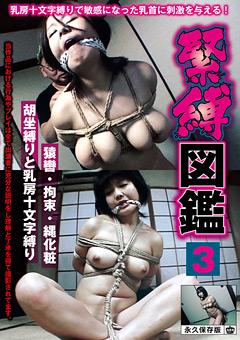 緊縛図鑑3 猿轡・拘束・縄化粧 胡坐縛りと乳房十文字縛り