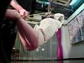 緊縛イズム01 肉を裂く縄・ゆきほ鼻責め宙吊り の画像12