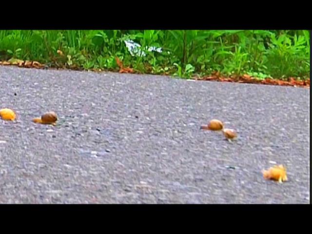 カタツムリがローファー・スニーカーで踏み潰される! 画像 1