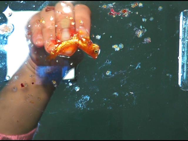 黒髪少女が金魚を素手で握りつぶしナマ足で踏み潰す! 画像 4