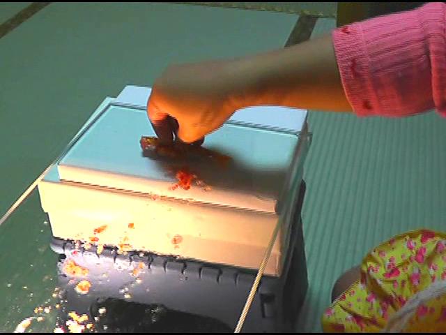 黒髪少女が金魚を素手で握りつぶしナマ足で踏み潰す! 画像 6