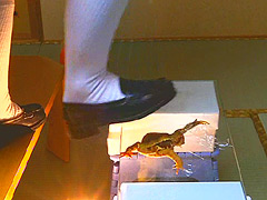 ローファー・ロングブーツナマ足が巨大ヒキガエルを踏む
