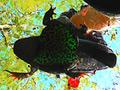 巨大ヒキガエル・ザリガニを黒パンプスで踏みにじるOL