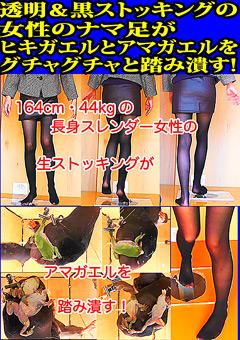 透明&黒ストッキングの女性のナマ足がヒキガエルとアマガエルをグチャグチャと踏み潰す!