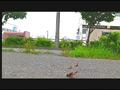 【復刻版】ザリガニが踏みにじられ自転車に轢き殺される-1