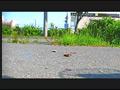 【復刻版】ザリガニが踏みにじられ自転車に轢き殺される-5