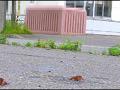 【復刻版】ザリガニが踏みにじられ自転車に轢き殺される-7