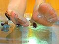 巨大ゴキブリを全体重をかけ生ストッキングで踏む!