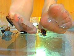 クラッシュ:巨大ゴキブリを全体重をかけ生ストッキングで踏む!