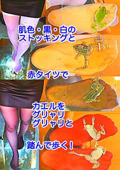 「肌色・黒・赤・白の生ストッキングでカエルをグニャリと踏むツキメ様!コオロギ踏みも!」のパッケージ画像