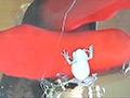 長身スレンダー女性がカエル踏み!屋外はイモリ!のサムネイルエロ画像No.2