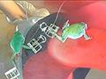 長身スレンダー女性がカエル踏み!屋外はイモリ!のサムネイルエロ画像No.3