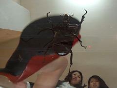 仕事帰りのOLに踏まれる高価な輸入カブト虫