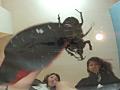 仕事帰りのOLに踏まれる高価な輸入カブト虫-7