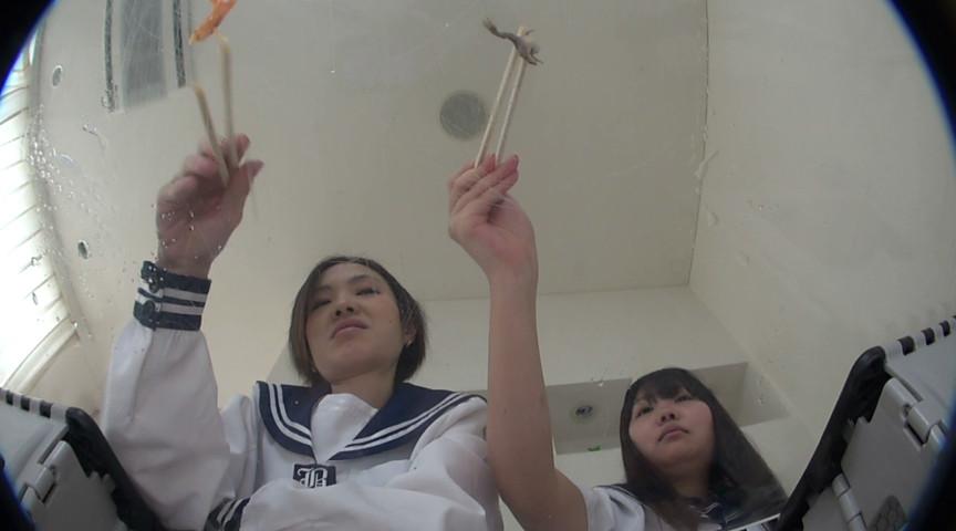 1匹数千円の輸入カエルをペチャンコにするSな2人組 の画像4