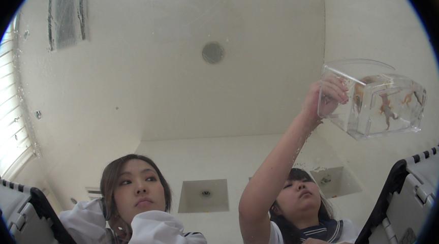 1匹数千円の輸入カエルをペチャンコにするSな2人組 の画像2