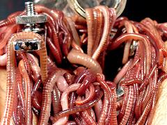 蚕桑に纏い雌濁が蚯蚓に螺混