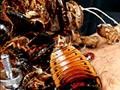 蜚蠊に難い雌襞と姦蝕に斑液