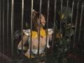 HEROINE陥落倶楽部05 聖戦美少女アルテミスZ-9