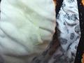 [kisyu-0471] 脱いだパンツを盗み撮り キャンギャル Vol.1