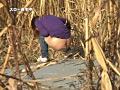 野外放尿してる女を隠し撮りした後、マ○コをさわる!サムネイル4