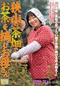 狭山の茶畑でお茶を摘むお母さん