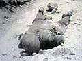 ドキュメント 第二次世界大戦の記録 第1巻 画像(9)