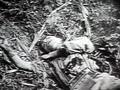 ドキュメント 第二次世界大戦の記録 第2巻 画像(3)
